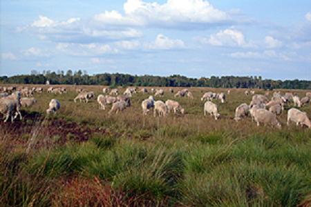 Besichtigung der Moorschäferei am 06. April