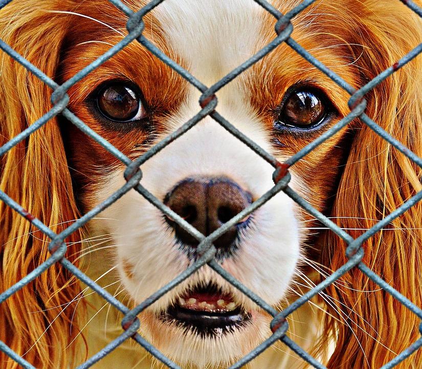 Aussetzung der Hundesteuer für Tierheimhunde