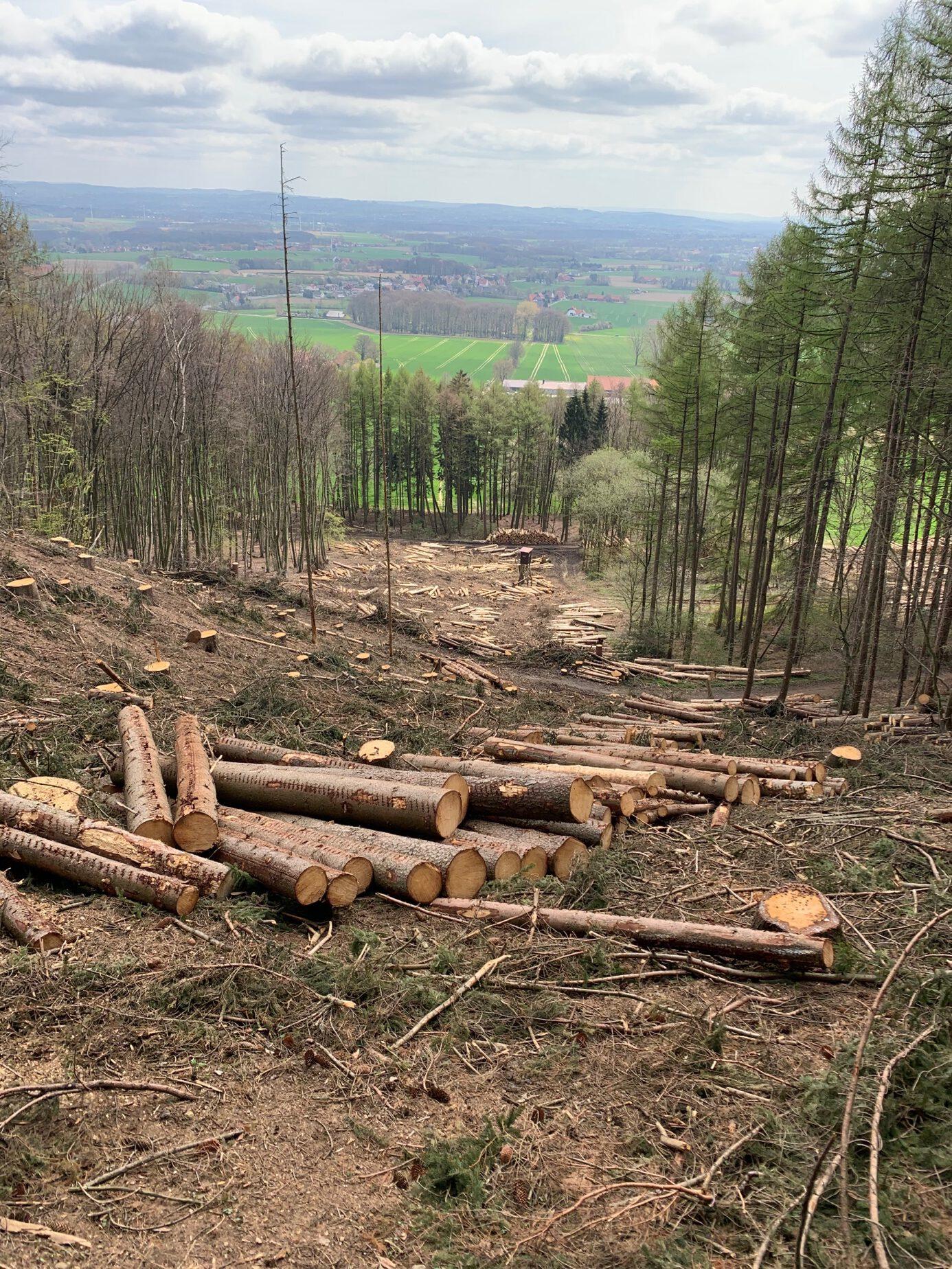 Antrag zur Rettung des Waldbestandes in Hüllhorst